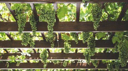 grapes-1542862_640