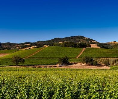 vineyards-1590014_640